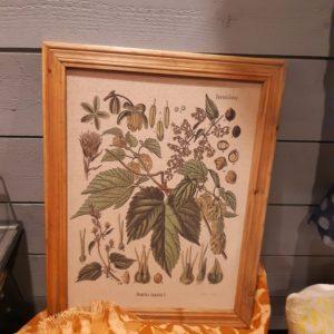 Bild Blumenmotiv